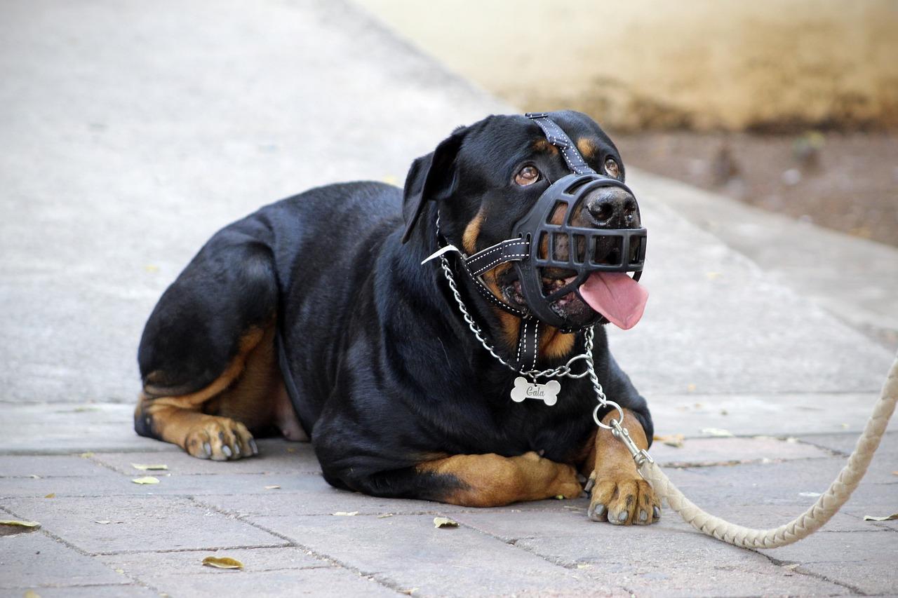 Start a Dog Training Business
