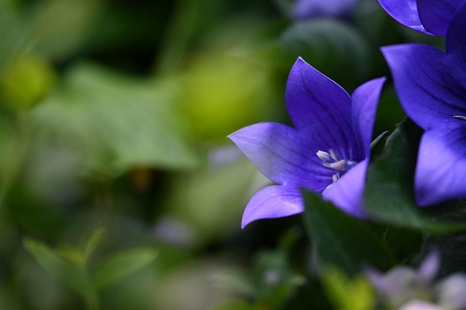 Fiore, Giardino, Flora, Impianto, Viola, Bellezza