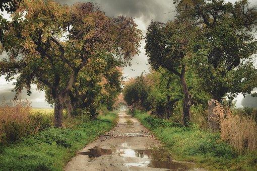 Weg, Pfütze, Nass, Regen, Bäume, Wetter