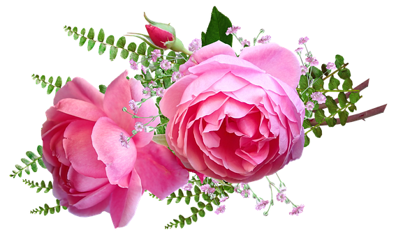 Flowers, Pink, Roses, Fern, Cut Out