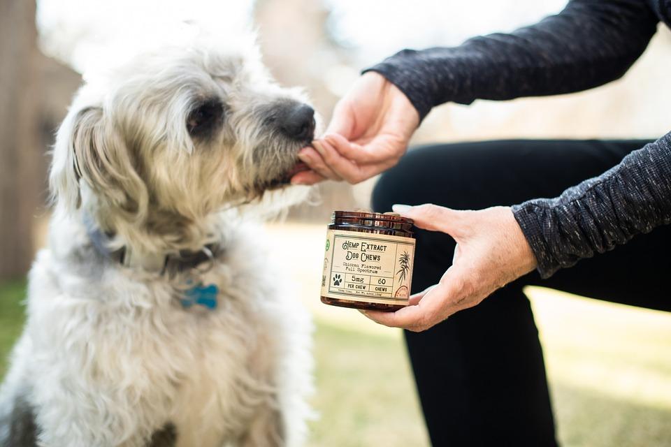 dog treat ingredients