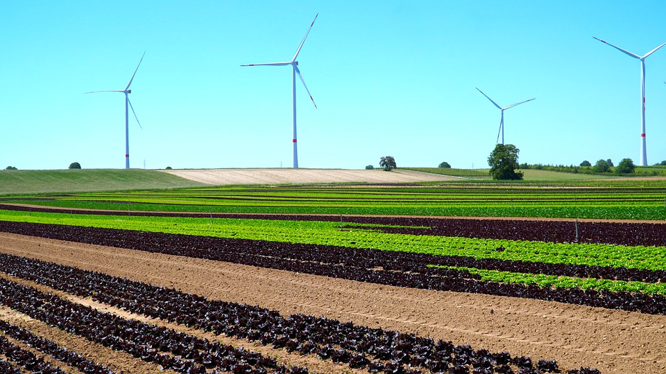 Windräder, Vegetable Field, Energy, Agriculture