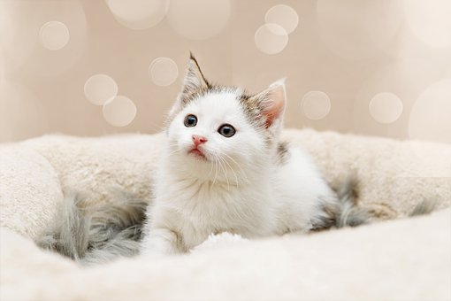 Kitten, Katzenbaby, Klein, Babykatze