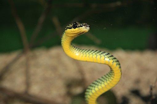 Snake, Green, Mamba, Terrarium, Reptile