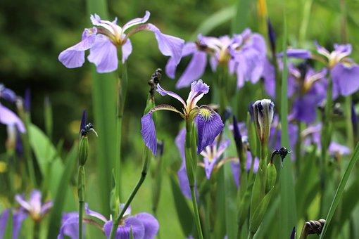 水草, のウォーター, 庭, 花, ばね, 自然, 植物, Flower