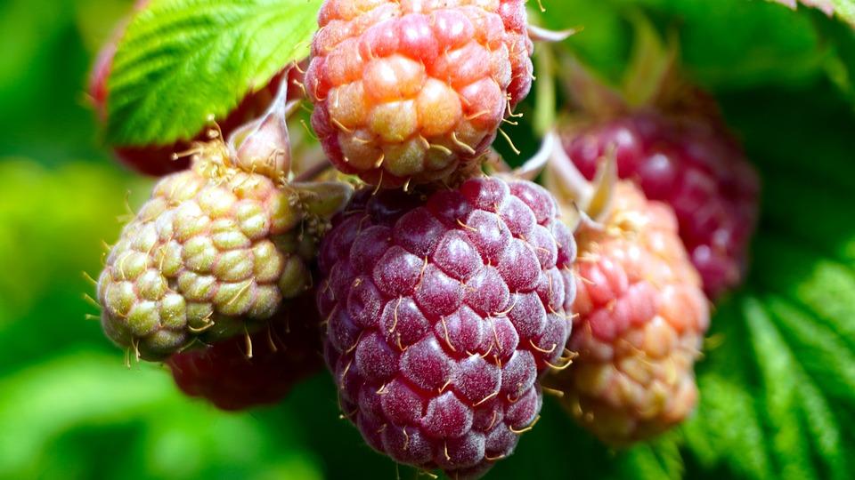 Lamponi, Frutta, Frutti Di Bosco, Sano, Vitamine