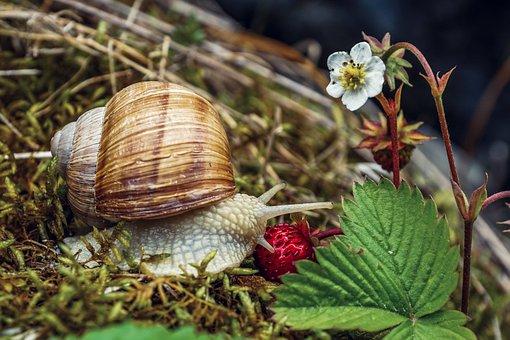Snail, Shell, Crawl, Mollusk, Nature