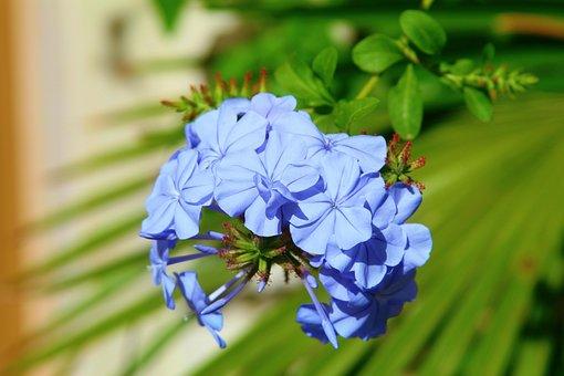 100+ Free Fiore Azzurro & Flower Images - Pixabay