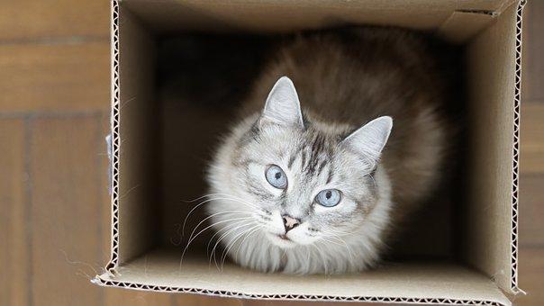 Kucing, Kotak, Berpikir, Anak Kucing