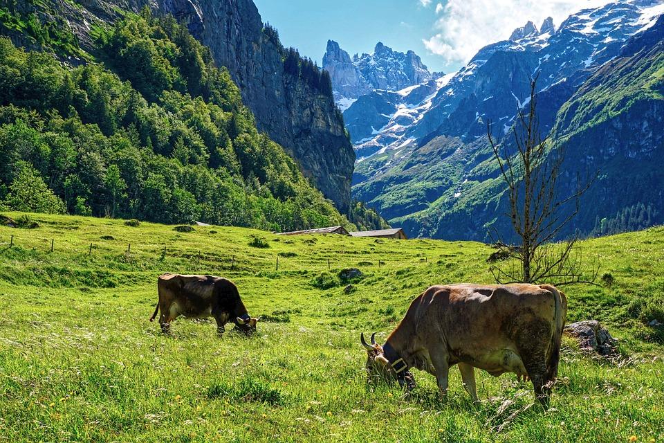 Fjell, Alp, Alpine, Landskap, Sveits, Naturen