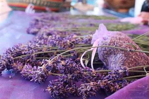 Lavande, Purple, Fleur, Couleur Lavande