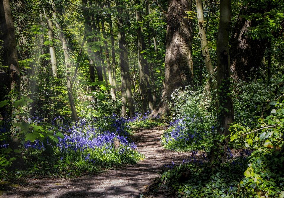 Je me souviens de telle fleur, dans un tel bois - Francis Jammes Forest-5292772_960_720