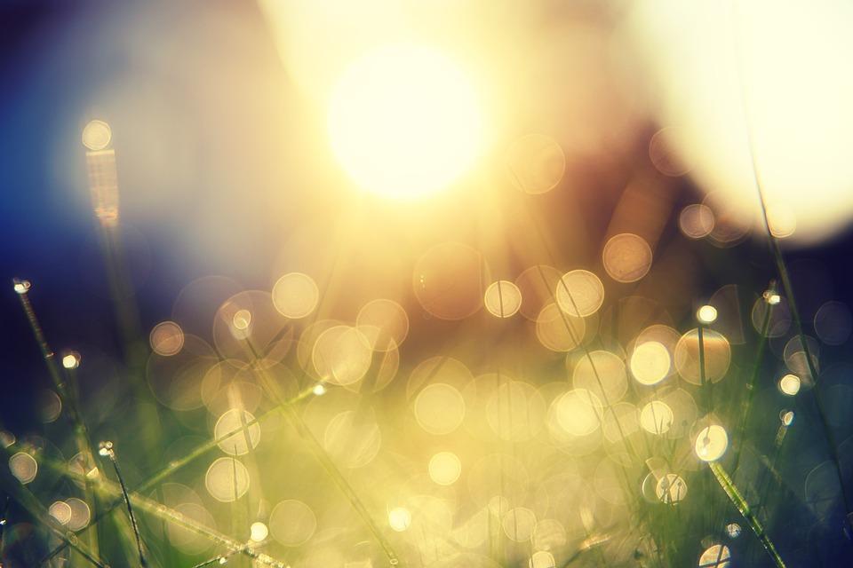 太陽, 草, 光, ピンぼけ, 喜び, 楽観主義, ドロップ水の, 点滴, ウェット, 自然, 牧草地, 風景