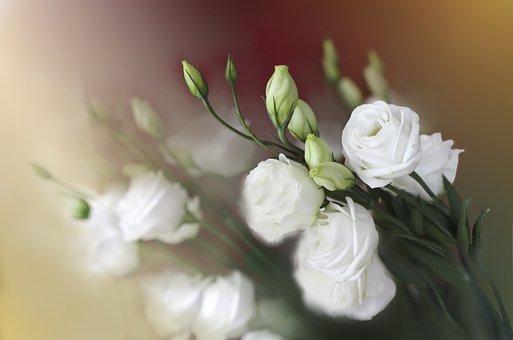 花、フラワーズ、ネイチャー、美容、美容、美容、自然