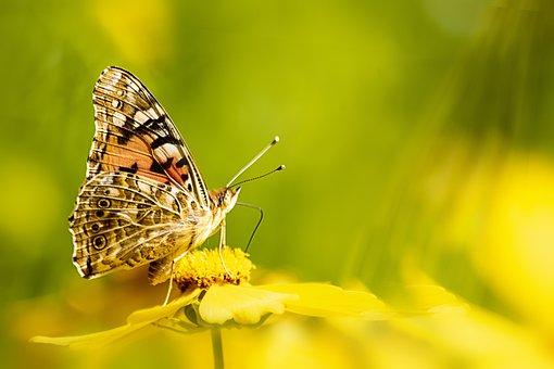 蝶, 昆虫, 自然, 花, 翼, マクロ, 蛾, 夏, 庭, オレンジ, 多彩な