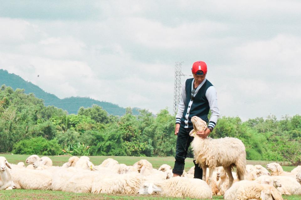 pásztor nézet