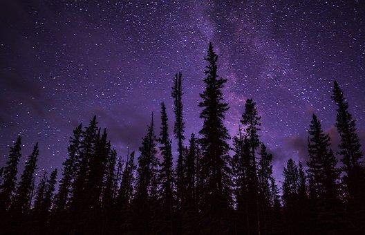 Stelle, Foresta, Boschi, Cielo Di Notte