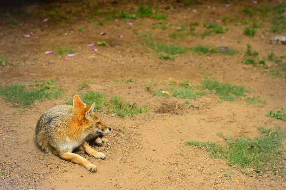 اضطراب ما بعد الصدمة للحيوانات