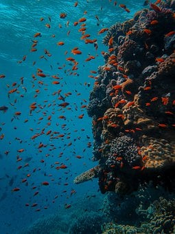 Underwater, Coral, Fish, Sea, Reef