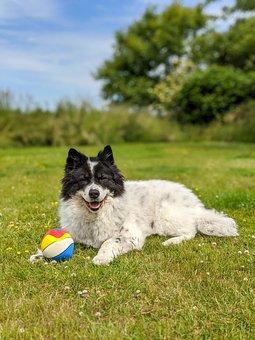 Hund, Chien, Happy Dog, Jouet Pour Chien