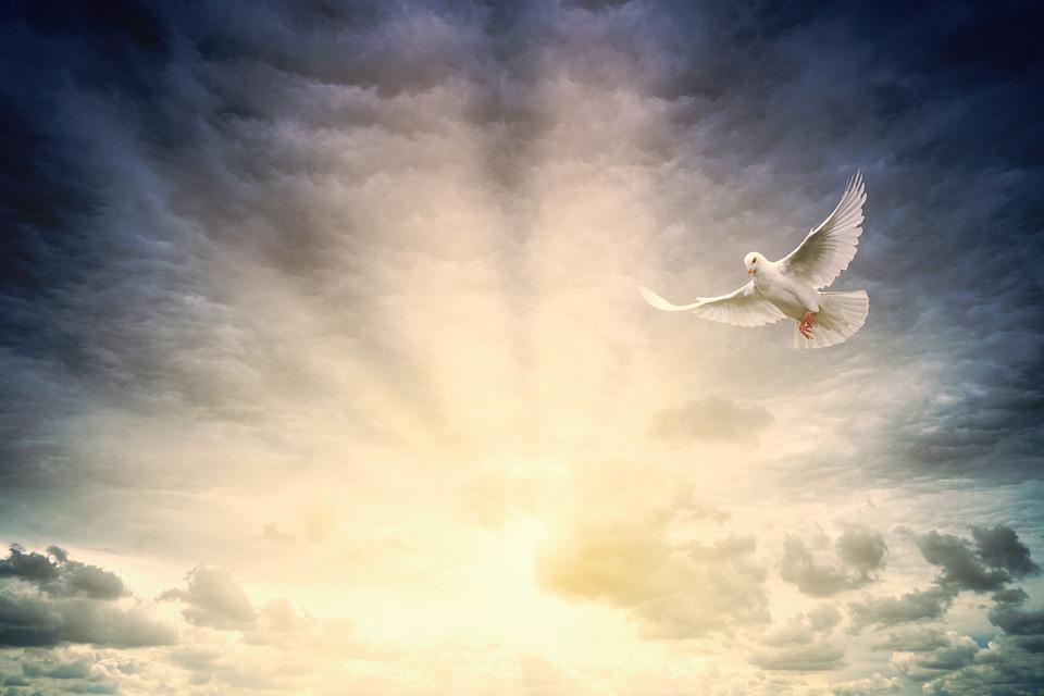 peace,peace-dove,