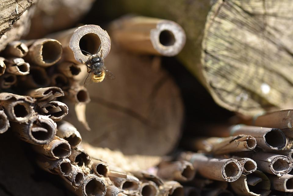 Solitary Bee, Bee, Wild Bee, Insect, Nature, Garden