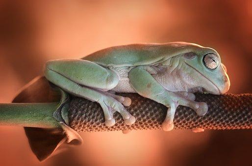 Frog, Sleeping, Leave, Sleep, Animal
