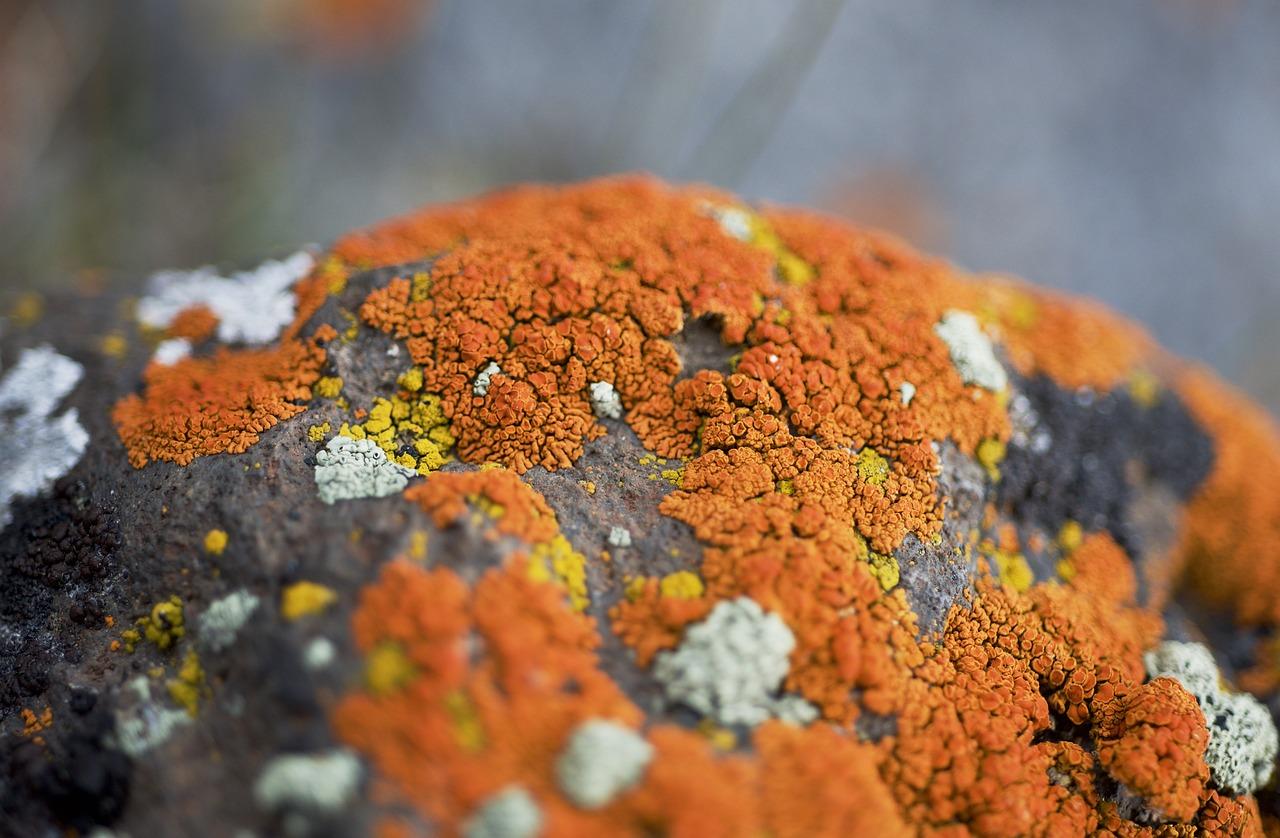 оранжевый мох фото в тундре время