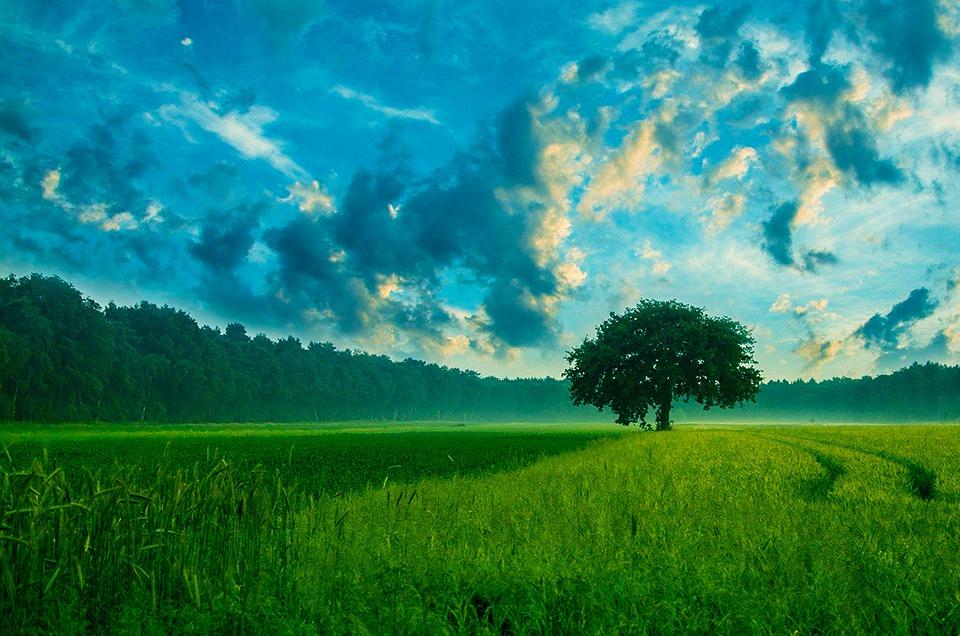 Alam, Lapangan, Pohon, Langit Awan, Daun, Musim Semi