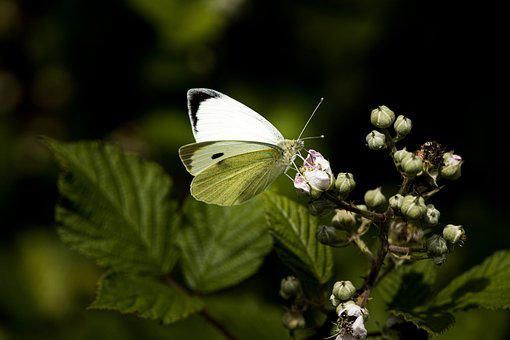 Butterfly, Close Up, Insect, Nature