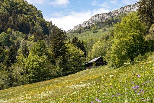 Pasture, Jura, Mountains, Meadow, Alp