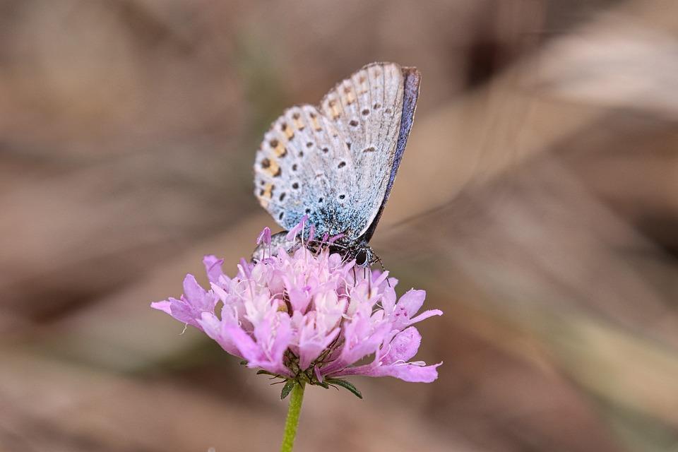 Insetto, Ali, Farfalla, Natura, Estate