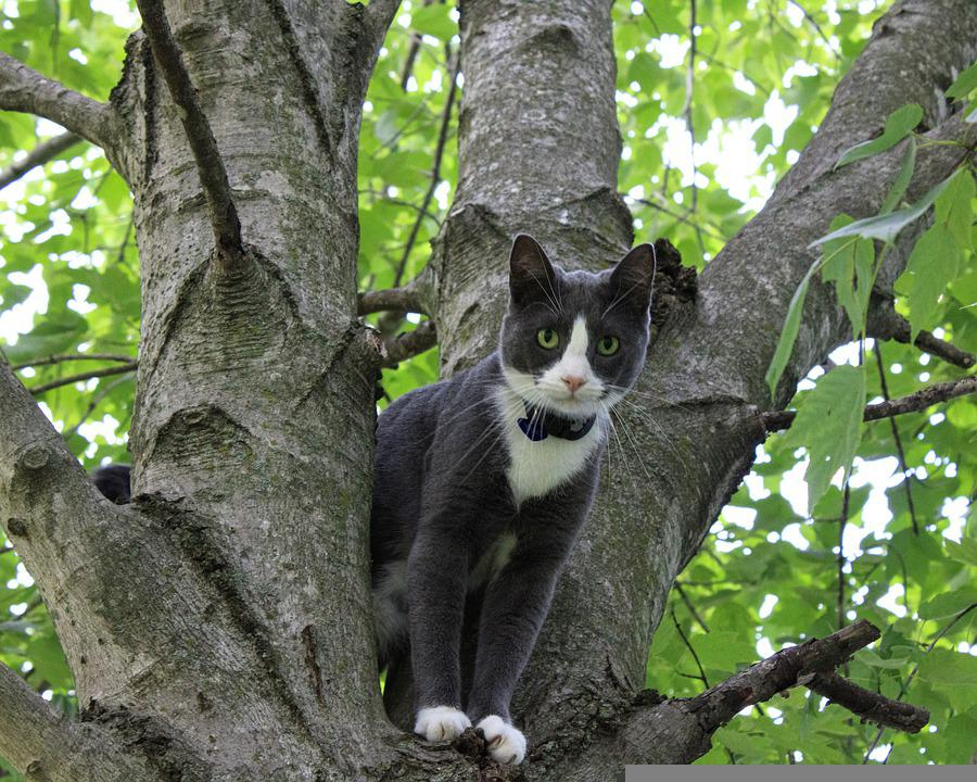 [Image: cat-5334203_960_720.jpg]