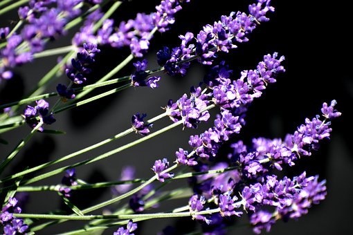 Jardin, Provence, Soleil, Fleurs, Épi