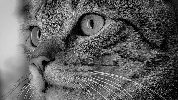 Katze, Katzengesicht, Nahaufnahme