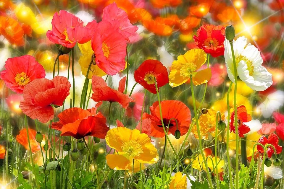 Přírody Zahrada Léto - Fotografie zdarma naPixabay