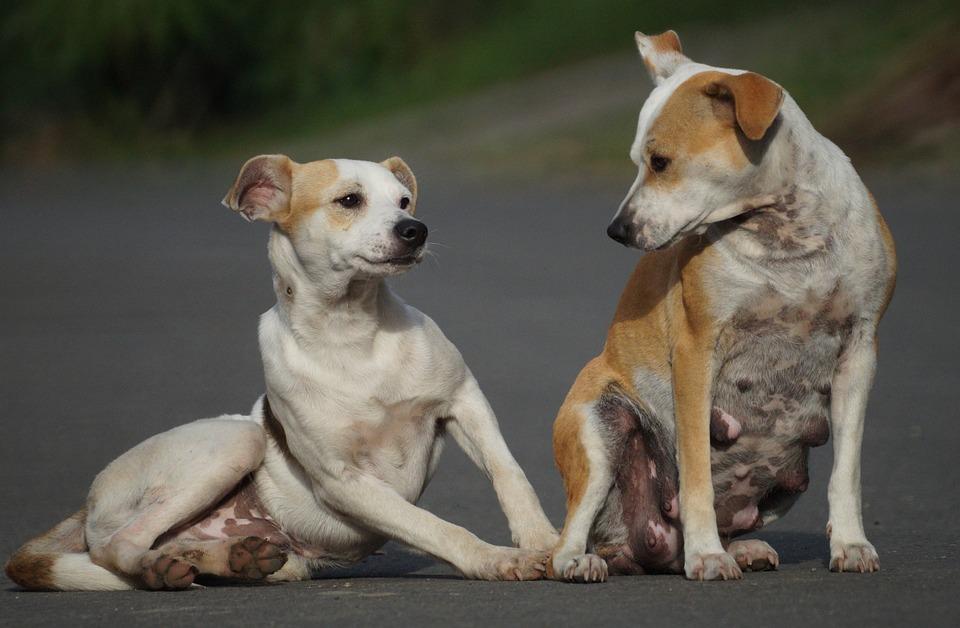 Drole Chien Canine Photo Gratuite Sur Pixabay
