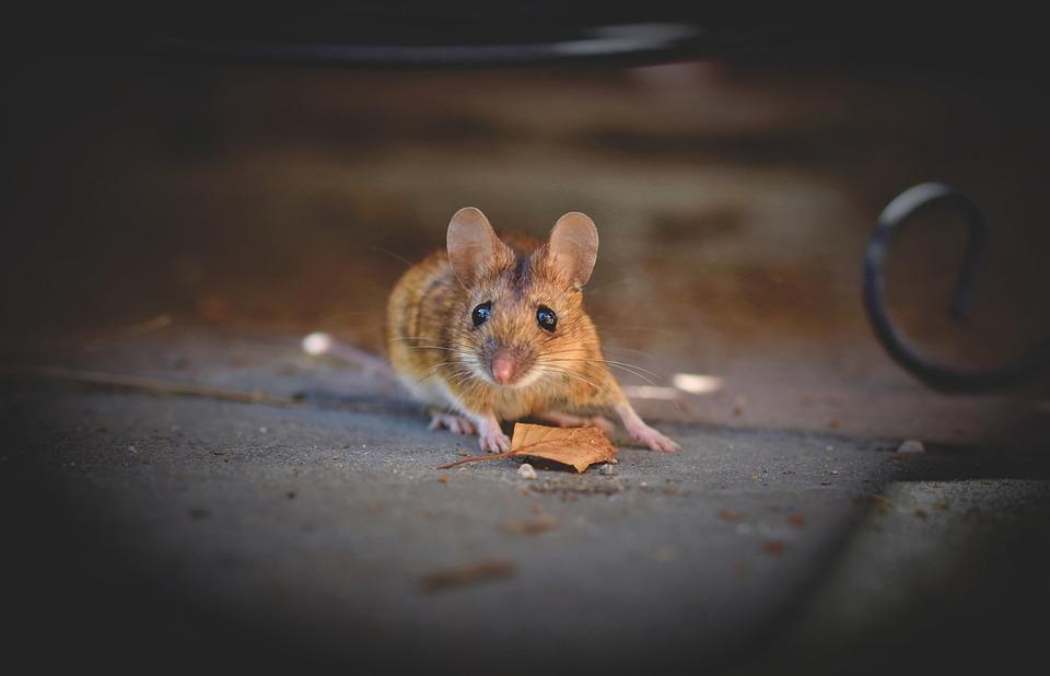 Домовая Мишката, Мишка, Дълго Мишката Опашката