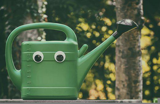 Watering Can, Garden, Nature, Gardening