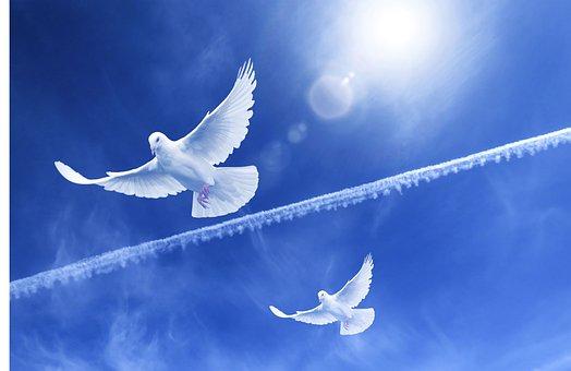 パロマ, フライト, 平和, 自由, 鳥, 翼, 羽, フライ, 希望, 青い空
