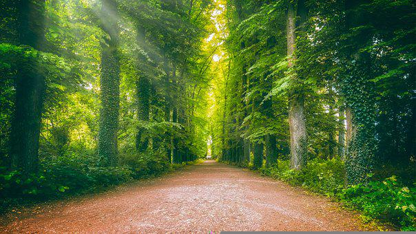 離れた, アベニュー, フォレスト, 太陽, 光線, 森の小道, 自然, 並木道