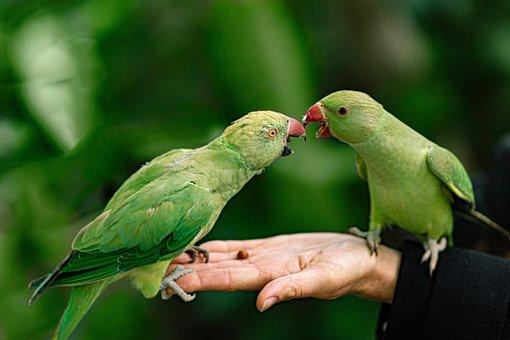 Parrots, Hand, Park, Feeding, Bird, Pet