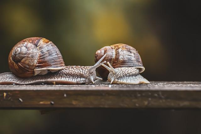 Snail u003cbu003eNatureu003c/bu003e Conservation - Free photo on Pixabay