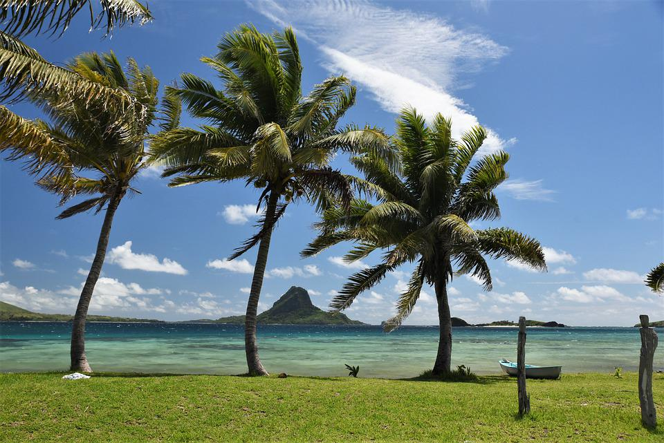Fidschi, Tropisch, Insel, Palm, Tropen, Exotische