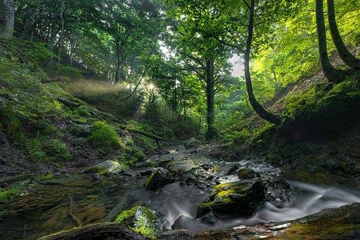 Landscape, Torrent, Beech Forest, Asahi