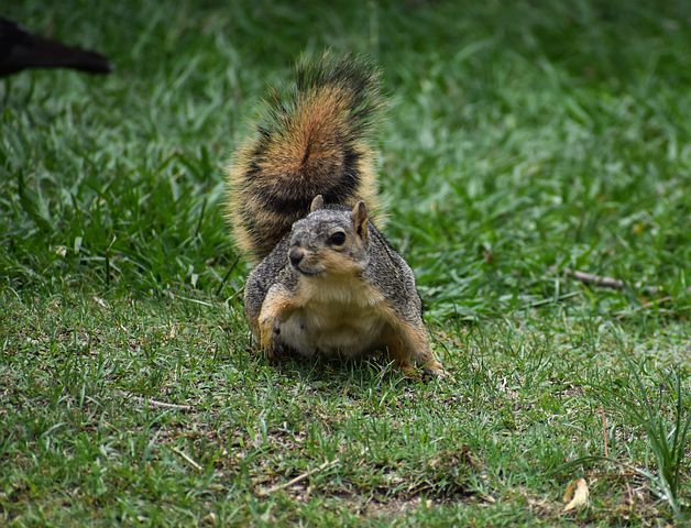 Picture of squirrel preparing to flee.