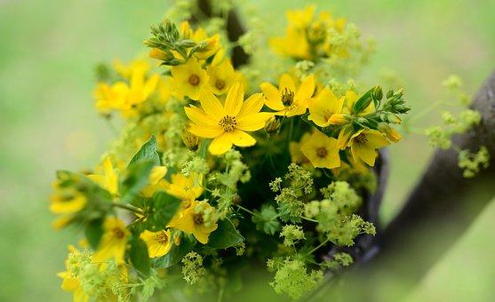 Mädchenauge, Flowers, Goldfelberich