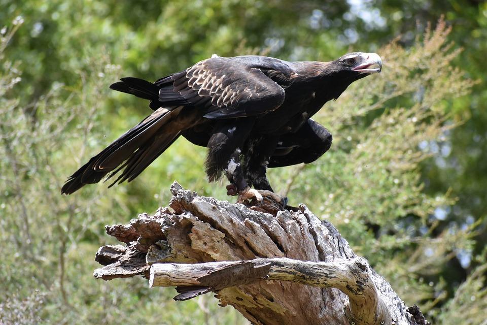 Baji Ekor Elang Burung Foto Gratis Di Pixabay