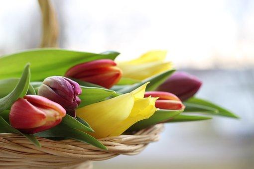 Tulpen, Strauß, Korb, Geschnitten