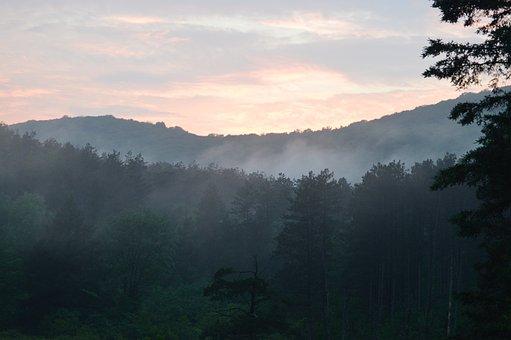 Catskill, Kabut, Hutan, Pegunungan, Alam